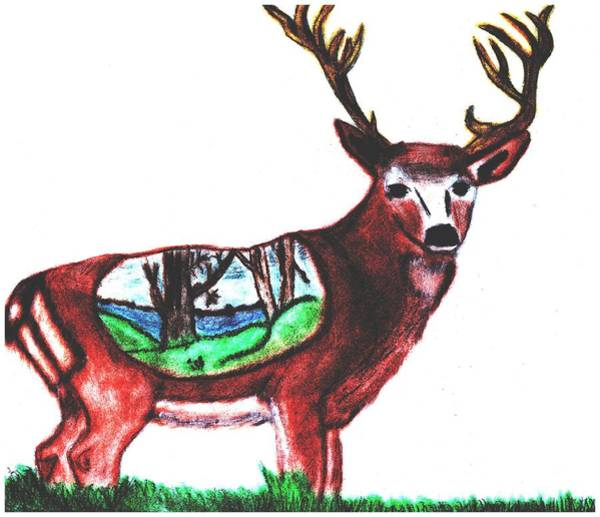 Beautiful Park Drawing - Deer World by Shaunna Juuti