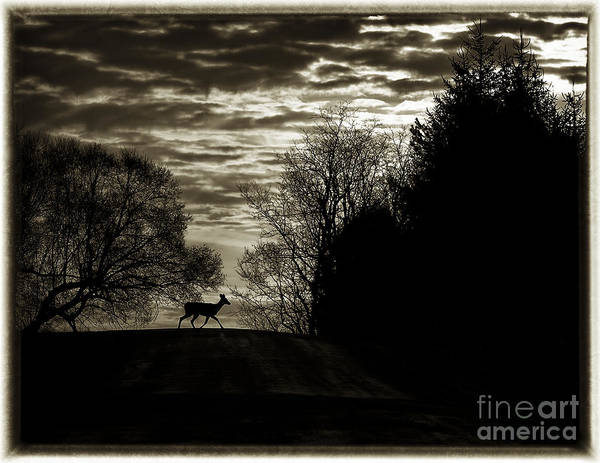 Wall Art - Photograph - Deer X-ing by Roger Bailey