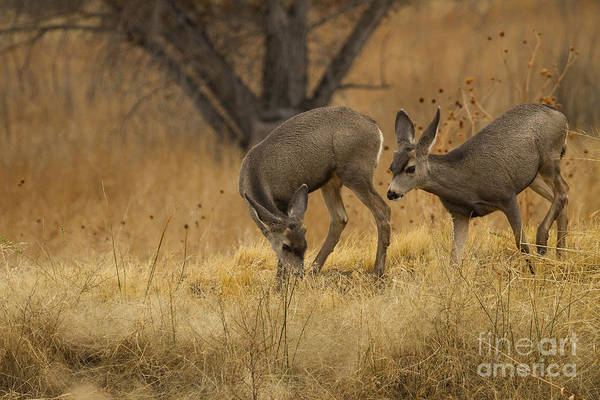 Wall Art - Photograph - Mom And Baby Deer In The Meadow by Ruth Jolly