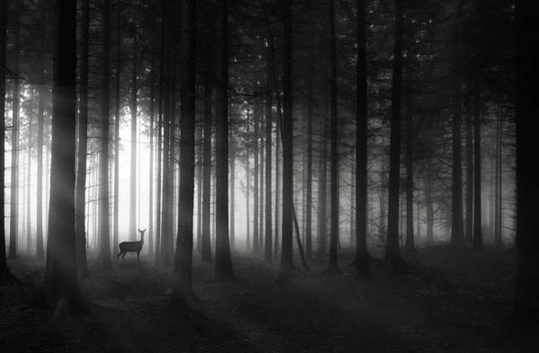 Wall Art - Photograph - Deer`s Morning by Christoph Hessel