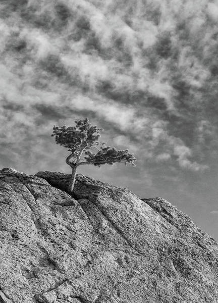 Photograph - Defiant II by Guy Whiteley
