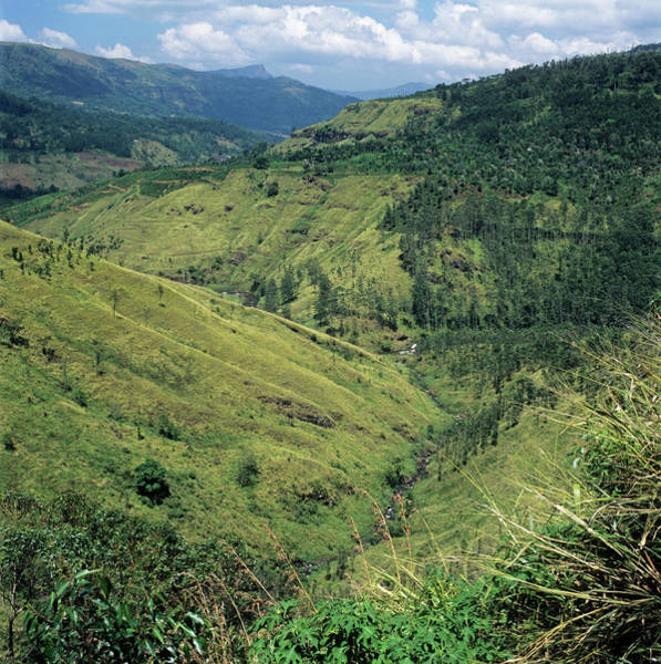 Gully Photograph - Deforested Valley by Mark De Fraeye/science Photo Library