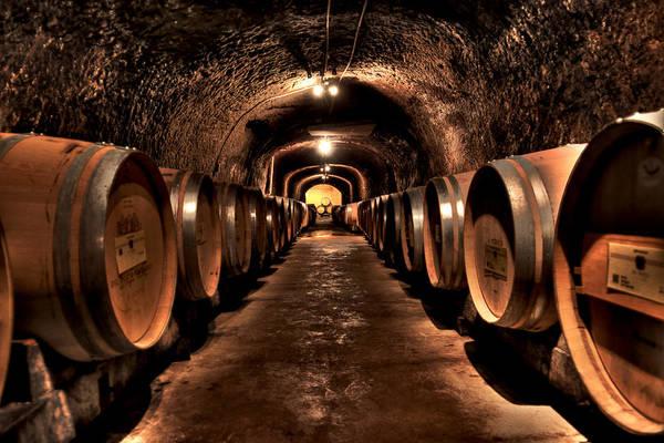 Wine Barrels Photograph - Del Dotto by Sean Willis