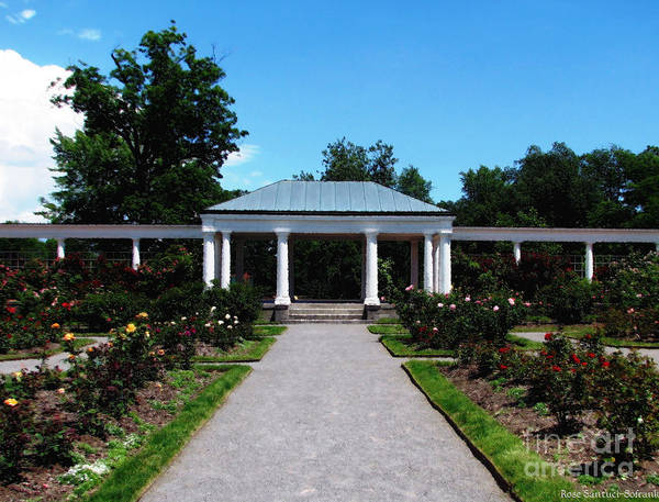 Photograph - Delaware Park Rose Garden And Pergola Buffalo Ny Oil Painting Effect by Rose Santuci-Sofranko