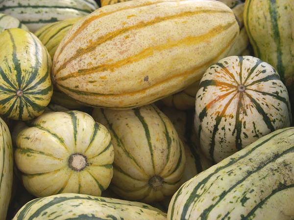 Cucurbitaceae Photograph - Delicata Squash by Bonnie Sue Rauch
