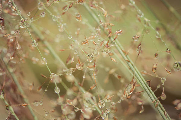 Photograph - Delicate Dew Drops by Ari Salmela