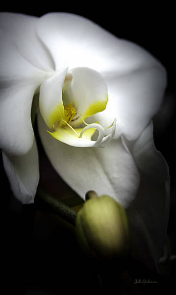 Photograph - Delicate Exotic Orchid by Julie Palencia