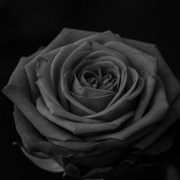 Photograph - Love In Darkness by Miguel Winterpacht