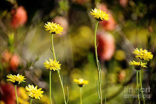 Photograph - Delightful Florets by Yew Kwang