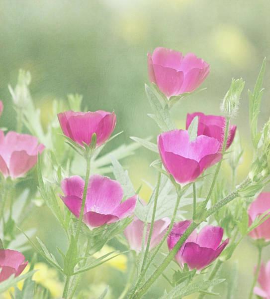 California Poppy Photograph - Delightful by Kim Hojnacki