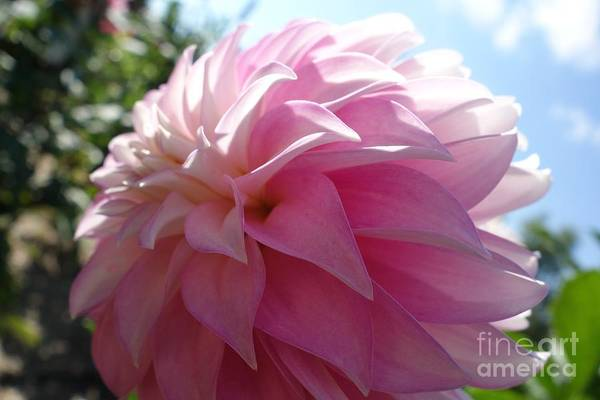 Photograph - Delightfully Pink by Jacqueline Athmann