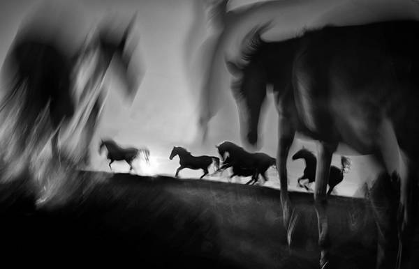 Gallop Wall Art - Photograph - Deliverance by Milan Malovrh