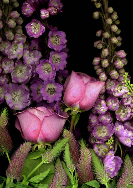 Anna Photograph - Delphinium And Roses On Black Background by Anna Miller
