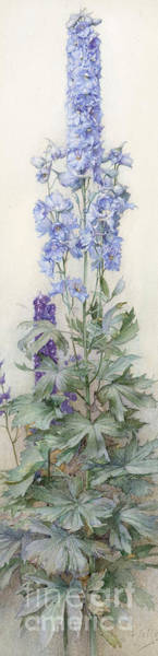 Valentines Painting - Delphiniums by James Valentine Jelley