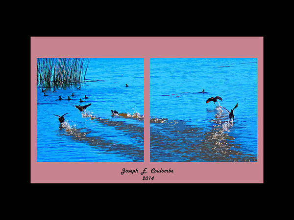 Digital Art - Delta Water Birds by Joseph Coulombe