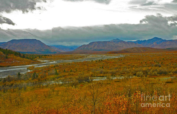 Photograph - Denali Np by Cindy Murphy - NightVisions