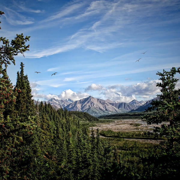 Photograph - Denali Valley by Heather Applegate