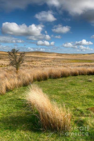 Conwy Photograph - Denbigh Moors by Adrian Evans