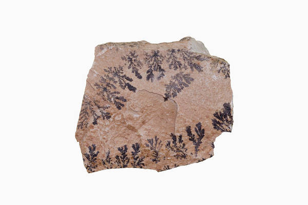 Dendrite Wall Art - Photograph - Dendrites On Sandstone by Science Stock Photography/science Photo Library