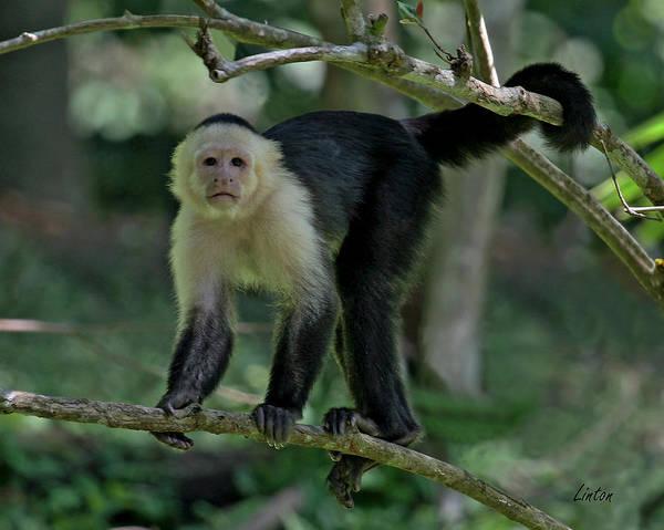 Photograph - Denizen Of The Rainforest by Larry Linton