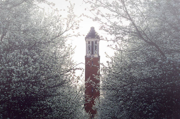 Photograph - Denny Chimes Foggy Blossoms by Ben Shields