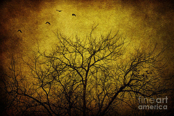 Wall Art - Photograph - Departed by Andrew Paranavitana