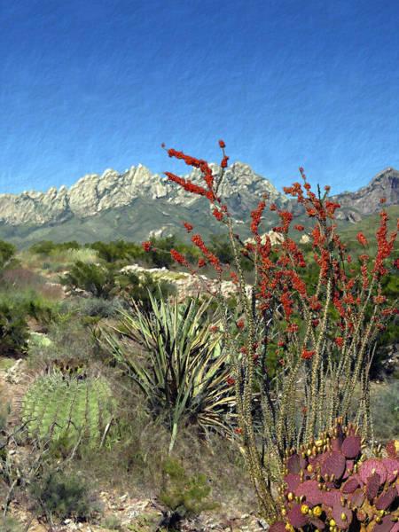 Photograph - Desert Bloom by Kurt Van Wagner