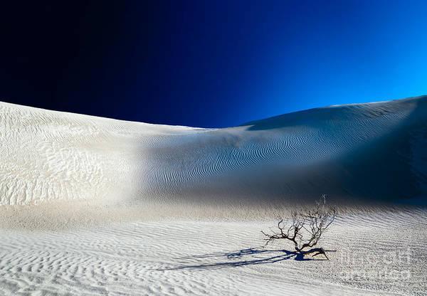 Photograph - Desert Branch Void by Julian Cook