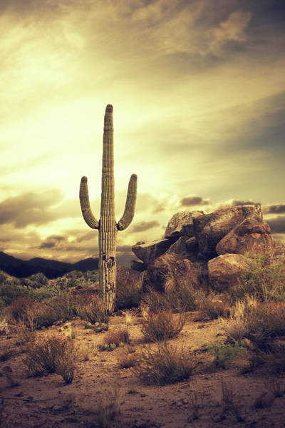 Copy Photograph - Desert Cactus - Classic Southwest by Hillaryfox
