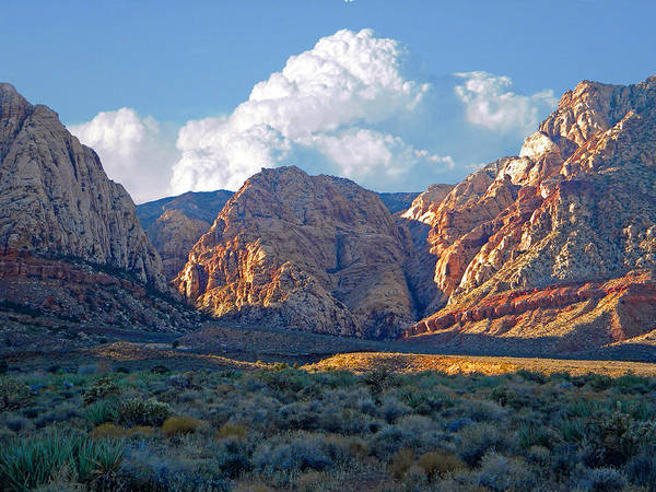Photograph - Desert Canyon by Frank Wilson