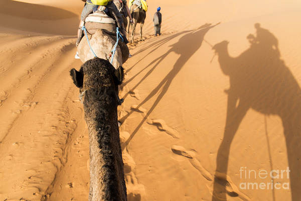 Deserts Photograph - Desert Excursion by Yuri San
