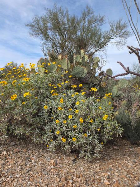 Wall Art - Photograph - Desert Flowers by Michael McGowan