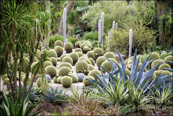 Photograph - Desert Garden by Richard J Thompson