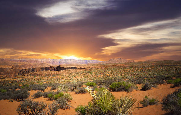 Outstanding Photograph - An Evening In The Desert by Aged Pixel