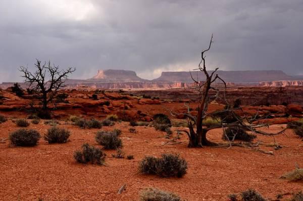 Photograph - Desert Light  by Tranquil Light  Photography