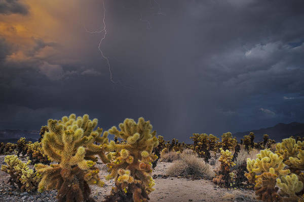 Photograph - Desert Monsoon Joshua Tree by TM Schultze
