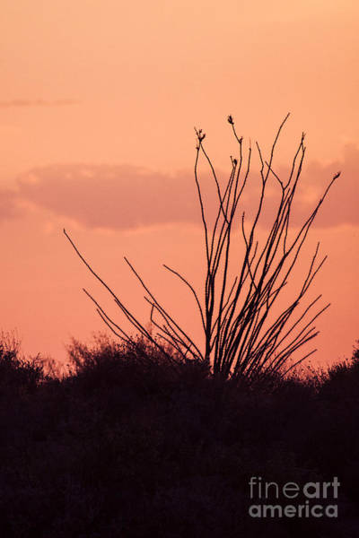 Wall Art - Photograph - Desert Nights by Ruth Jolly