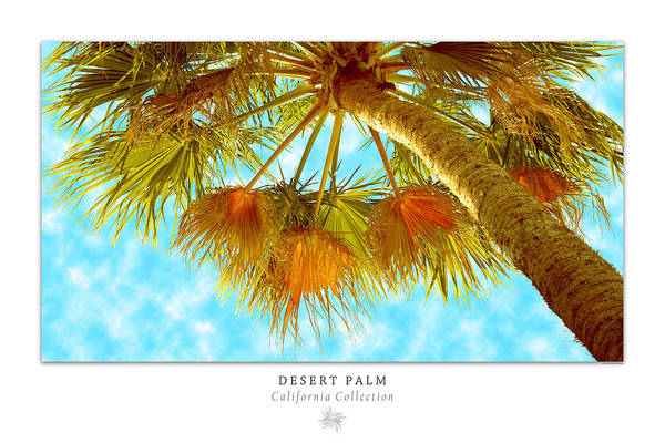 Photograph - Desert Palm Art Poster - California Collection by Ben and Raisa Gertsberg