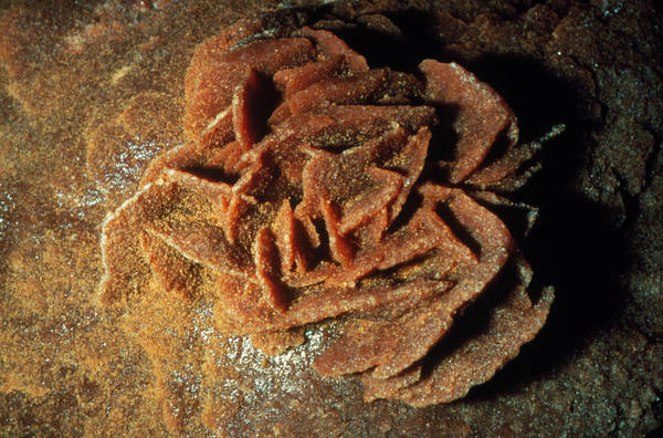 Desert Rose Photograph - Desert Rose- From The Sahara by Sinclair Stammers/science Photo Library
