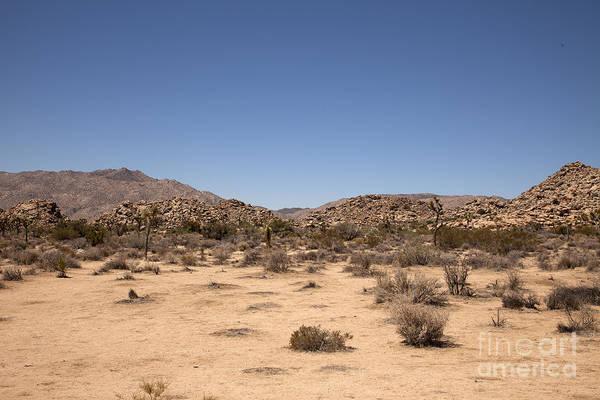 Wall Art - Photograph - Desert Scape by Amanda Barcon