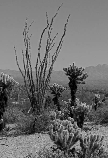 Wall Art - Photograph - Desert Scenic II - Black And White by Suzanne Gaff