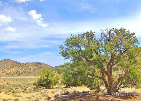 Bishop Hill Photograph - Desert Shade by Marilyn Diaz