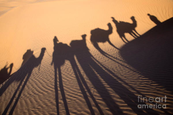 Dromedary Wall Art - Photograph - Desert Shadows by Delphimages Photo Creations