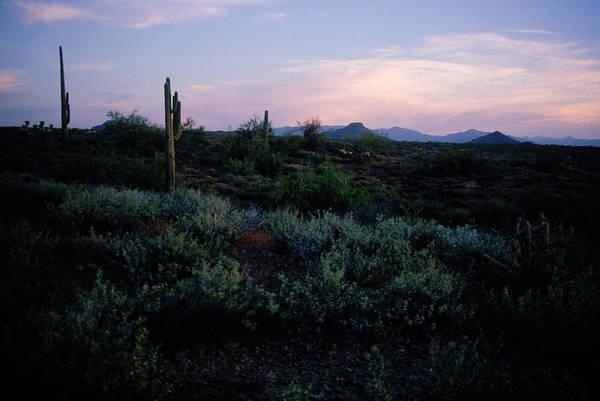 Tombstone Arizona Photograph - Desert, Southwest, Arizona, Cactus by Nance Trueworthy