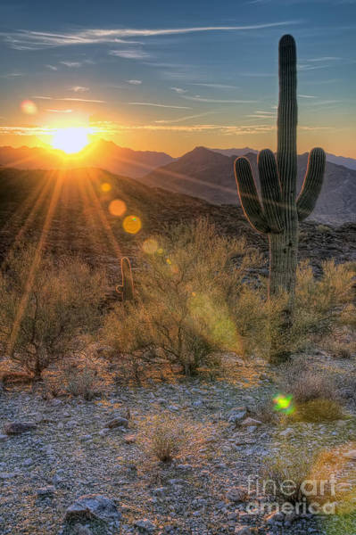 Deserts Photograph - Desert Sunset by Eddie Yerkish