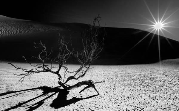 Photograph - Desert Sunset by Julian Cook