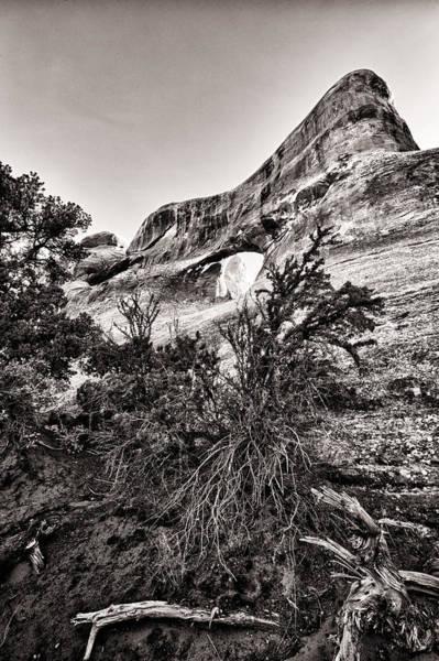 Wall Art - Photograph - Desert Trees by Juan Carlos Diaz Parra