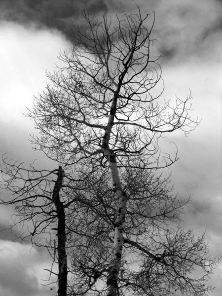 Photograph - Desert Trees by Tarey Potter