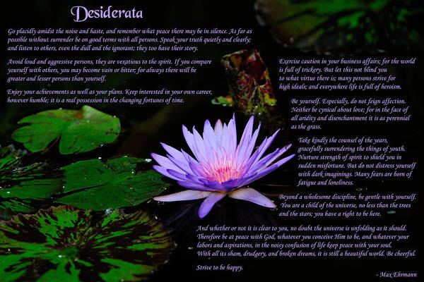 Art Print featuring the photograph Desiderata 2 by Greg Norrell