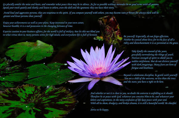 Photograph - Desiderata by Greg Norrell